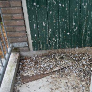 vogelpoep balkon voorkomen duiven verjagen