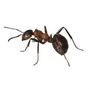 Mieren en insecten